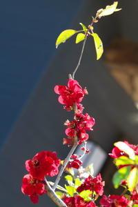 お寺さんのお庭にて - tokoのblog