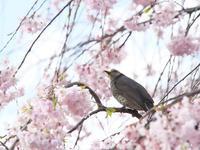 散る花を惜しむ - 節操のない写真館