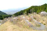阿蘇・高森町 九十九曲の桜 - Photograph & My Super CUB110 【しゃしんとスクーター】