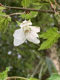 4月7日(水)上野池の春植物いろいろ - 庄原市上野公園(上野池)とその周辺の出来事