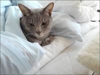 あの元気な子がどうした! - クロのこと・そして猫たちのこと~猫と共に老いを生きる~
