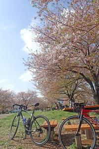 桜吹雪のカワセミポタ - 元 子連れバーダーの日々