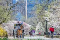 春が来た - Triangle NY