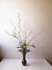 マンサクが咲き、ヤマブキが関東から到着しました。 - 長女Yのつれづれ記