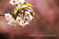 植物園に行く4月(2021年)7 - 写楽彩2