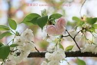 植物園に行く4月(2021年)10 - 写楽彩2