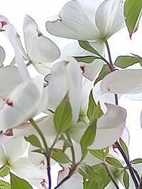 サクランボにイチゴ - hanasdiary.exblog.jp