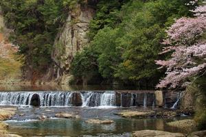 屏風岩 桜風情 - ♪一枚のphotograph♪