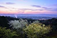 新緑と桜と三日月明神山 - 峰さんの山あるき