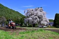 信州安曇野古木桜巡り - 季節の写真・・・感
