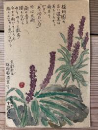 嬉しいこと - 京都西陣 小さな暮らしから、田舎暮らしへぼちぼち・・・
