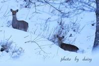 冬の終わり - ロマンティックフォト北海道☆カヌードデバーチョ
