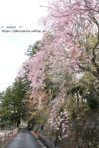 桜と、え? - Select