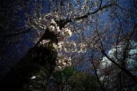 散歩道の季節が通り過ぎる#0120210405 - Yoshi-A の写真の楽しみ