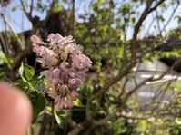 花観察。5 - ぺりどっと コム