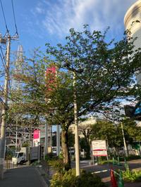 近所の桜散りゆく11 - 魔王の独り言 の続編
