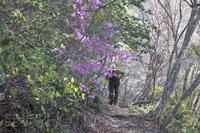 大万木山を歩く(2021/04/07) - まるさん徒歩PHOTO 4:SLやまぐち号・山風景など…。 (2018.10.9~)