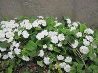 裏庭で遊ぶ - 花の自由旋律