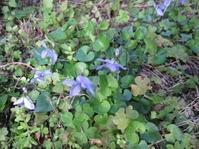 裏庭で昨日の続きの草抜きです。 - 花の自由旋律