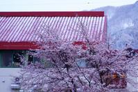 今日の野沢温泉降雪がありました - 野沢温泉とその周辺いろいろ2