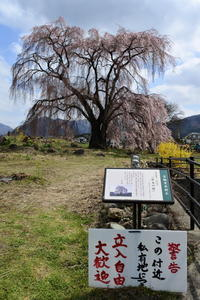 長野そぞろ歩き・高山:花見・枝垂れ桜巡り - 日本庭園的生活