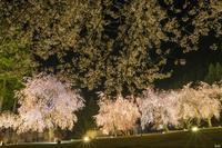 山竹田の夜桜 - 四季燦燦 癒し系~^^かも風景写真