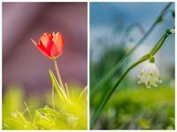 spring#20 - The collection of photograph
