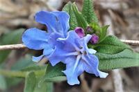 野に咲く花 - 里山の四季