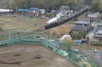 三塁ランナーがホームを目指す- 2021年桜・秩父鉄道 - - ねこの撮った汽車