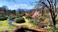 春の色彩が華やかになって来た!・・・4月7日赤城自然園アラカルト - 『私のデジタル写真眼』