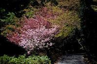 瀬戸内ドライブ☆広島市森林公園 - できる限り心をこめて・・Ⅳ