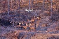 鹿に注意を - ハーブガーデン便り