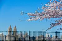 少しの風と微かな歌声 - Triangle NY