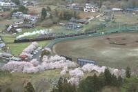 桜満開の野球場- 2021年桜・秩父鉄道 - - ねこの撮った汽車
