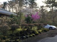 富士桜と三葉ツツジ満開@十里木高原別荘地 - 小粋な道草ブログ