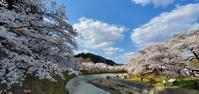 あさひ公園の桜@福島県石川町 - 963-7837