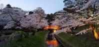 翠ヶ丘公園の桜@福島県須賀川市 - 963-7837