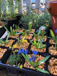 春の喜び - 三楽 3LUCK 造園設計・施工・管理 樹木樹勢診断・治療