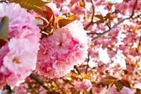 春の感じ - 日々の写真