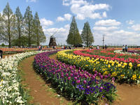 青空チューリップ♪あけぼの山農業公園へ - Let's Enjoy Everyday!