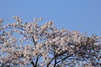 窓から桜 - No dam@ge ! 3