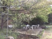 タラの芽の天ぷら - 旅と数学  それとdiy