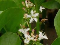 草木の花(1) - 花と葉っぱ