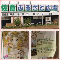 千葉・佐倉の「チューリップまつり」へ - ポポの日記と花とドライブ