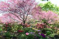花木の饗宴~町田ぼたん園 - バラとハーブのある暮らし Salon de Roses