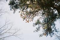 フィルム・CLEwithElmar35mm#0220210411 - Yoshi-A の写真の楽しみ