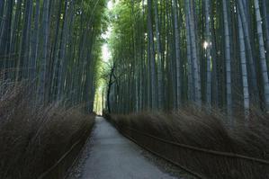 竹林の小径 藪椿の頃 - Deep Season