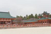 京都の桜「平安神宮」 - rurugardenと音符たち