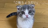珀くんONの時間 - 金沢市 床屋/理容室「ヘアーカット ノハラ ブログ」 〜メンズカットはオシャレな当店で〜