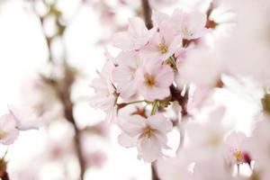春の俳句2021 - とべるね